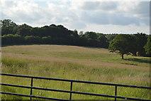 TQ3226 : Meadow by Copyhold Lane by N Chadwick