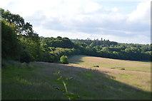 TQ3226 : Farmland by Copyhold Lane by N Chadwick