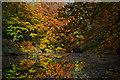 SX7289 : Teignbridge : River Teign by Lewis Clarke