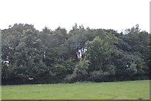 TQ3328 : Woodland by Ardingly Reservoir by N Chadwick