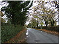 SJ5252 : Bickerton Road near Ivy Farm by JThomas