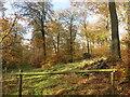 SU7794 : Kite Wood by Des Blenkinsopp
