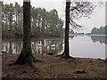 NT0074 : Swans at Beecraigs Loch : Week 47