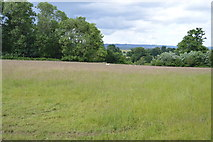 TQ5043 : Grassy meadow by N Chadwick