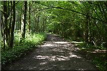TQ5044 : Eden Valley Walk, The Slips by N Chadwick