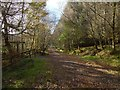 NS2984 : Path junction in Highlandman's Wood by Lairich Rig
