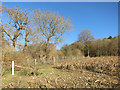 SU7985 : Path into Chalkpit Wood by Des Blenkinsopp