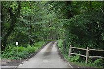 TQ5346 : Footpath through Price's Wood by N Chadwick