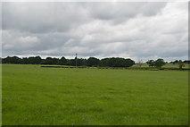 TQ5347 : Pasture, Leigh Park Farm by N Chadwick