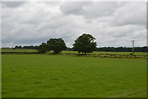 TQ5347 : Two trees by N Chadwick