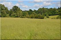 TQ5145 : Footpath crossing meadow by N Chadwick