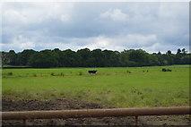 TQ5347 : Kent Farmland by N Chadwick