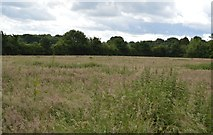TQ5247 : Grassy meadow by N Chadwick