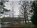NH5153 : Trees on the bank of the Conon by Julian Paren