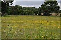 TQ5246 : Buttercup meadow by N Chadwick