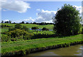 SJ6544 : Pasture north-west of Audlem in Cheshire by Roger  Kidd
