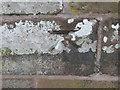 SJ4555 : Ordnance Survey Cut Mark by Peter Wood