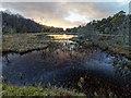 NH6149 : Mill Pond by valenta