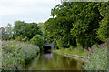 SJ5446 : Llangollen Canal near Quoisley Bridge, Cheshire by Roger  Kidd