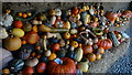 SW9946 : The Lost Gardens of Heligan - Pumpkin display in Melton Yard by Colin Park