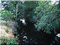 SX8386 : River Teign downstream of Batts Brook Bridge by Stephen Craven
