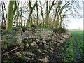 SE3616 : Damage along Charles Waterton's wall by Christine Johnstone