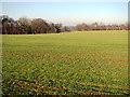 TG2715 : View towards Dobb's Plantation by Evelyn Simak
