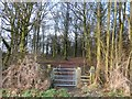 SE4206 : Woodland Entrance near Great Houghton by Jonathan Clitheroe
