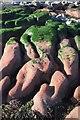 SX8961 : Seaweed and rocks near Hollicombe Head by Derek Harper