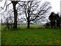 H5270 : Trees, Tattykeeran by Kenneth  Allen