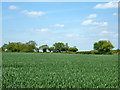 TL7020 : Wheat field north of Bannister Green - Frenches Green road by Robin Webster