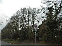 SP9736 : Trees by Station Road, Ridgmont by David Howard