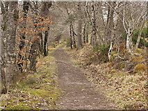 NH6391 : Track beside Loch Migdale by Julian Paren
