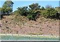 SX9187 : Sandstone cutting, A38 by N Chadwick