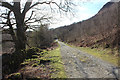 NX4180 : 7stanes National Cycle Route by Billy McCrorie
