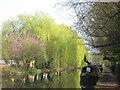 TL0604 : Lovely canalside trees north of Nash Mills locks by John Slater