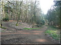 TL1141 : Track in Chicksands Bike Park, Southill by Humphrey Bolton