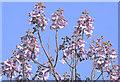 SJ7985 : Spring Blossom (4) : Week 14
