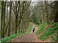 NZ4902 : Path in Whorl Hill Wood : Week 14