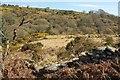 SX6675 : East Dart valley near Babeny by Derek Harper