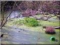 TQ8012 : Highlea Pond, St Leonards-on-Sea by Patrick Roper