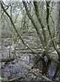 ST7759 : Abbey pond? by Neil Owen