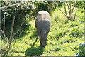 SJ4169 : Babirusa (Babyrousa sp.) at Chester Zoo by Mike Pennington
