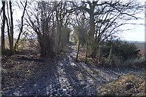 TL3858 : Footpath junction by N Chadwick