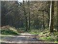SU9493 : Woodland, Beaconsfield by Andrew Smith