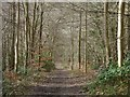 SU8994 : King's Wood, Chepping Wycombe by Andrew Smith