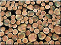 S7040 : Stacked Logs by kevin higgins