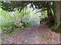 TQ3432 : Footpath going uphill in Little Sheepwash Wood by Shazz