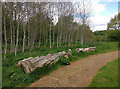 SK5701 : Path and woodland on the Aylestone Meadows by Mat Fascione