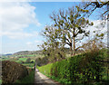SU8294 : Toweridge Lane, West Wycombe by Des Blenkinsopp